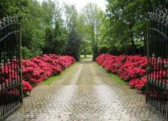 Flower lined driveway