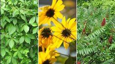 7 növény, amely ragaszkodik a kertben az örök élethez Plants, Plant, Planets