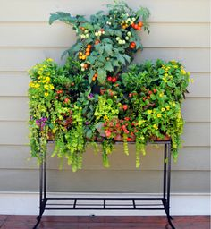 Enjoy Pamela Crawford side planting Window Boxes on patios, against deck railings or against siding (where you don't want to drill mounting holes). Found at Kinsman Garden (www.kinsmangarden.com)