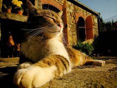 Доброе утро всем нам. А у нас опять солнечно и настроение  ленивое и на душе покой. Хорошо то, как!)