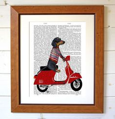 Dachshund On Moped, Antiquarian Book Print