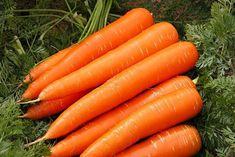 если морковь растрескивается и становится кривой морковь вырастает мелкой в том случае, если
