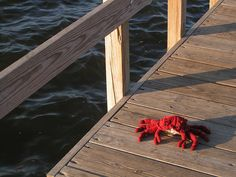 Ravelry: The Deadliest Crab pattern by Amber Allison