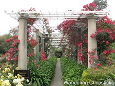 huntington library gardens - Google Search