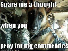 Have a heart for ALL of our soldiers, whether they have two legs or four.