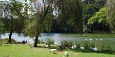 São Paulo - Parque Alfredo Volpi - Pesquisa Google
