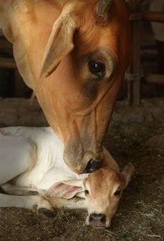 all my farm animals would be pets Beautiful Creatures, Animals Beautiful, Farm Animals, Cute Animals, Gato Animal, Fresh Farmhouse, Country Farm, Country Life, Country Living