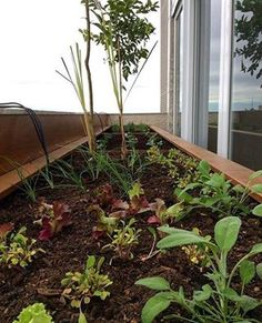 Floreira para horta, feita pela Ecotelhado!