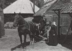 paragraaf 1 - paard en wagen, vroeger werden veel paarden gebruikt als vervoer middel.