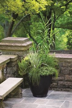Grasses as container plants add drama and texture to your outdoor space.
