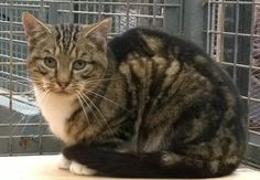 tabby feral cat - rehomed