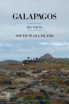 South Plaza Island in the Galapagos.  Read on to find out why this island should be on your list of Galapagos day trips!