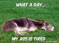 This will make me laugh on a bad fibromyalgia day!!!