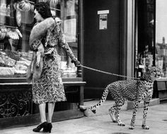 Actress Phyllis Gordon shopping in 1939 with a cheetah she had flown in from Kenya.