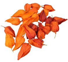 Physalis Flowers