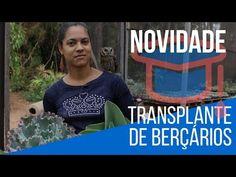 GRANDE NOVIDADE + Transplante de Berçario de cactos e suculentas - YouTube