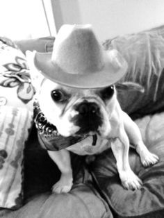 French Bulldogs Utah Cowboy Style