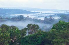 Selva Umbrófila o Pluvisilva: Bioma de zonas cálidas y húmedas, caracterizado por una formación arbórea y vegetal densa y exuberante, y una humedad alta durante todo el año. Se sitúa en la zona intertropical, y sus formaciones arbóreas suelen ser perennifolias y de hoja ancha (frondosas). El clima es cálido y con poca variabilidad anual (< 5ºC) y lluvioso durante casi todo el año.