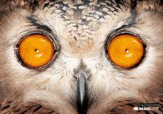 Maglite: #Owl   http://www.gutewerbung.net/maglite-owl-leopard-bushbaby-ads/ #Advertising #Pupil