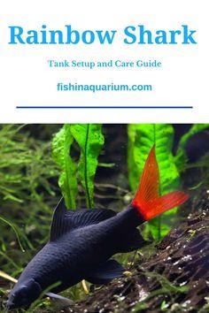 Fishing Life, Fly Fishing, Shark Tank, Fish Tank, Aquarium Ideas, Freshwater Fish, Fresh Water, Rainbow, Pets