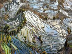 Staple food for half the people on Earth, rice has grown in paddies like these in Yuanyang, Yunnan Province, for centuries. Within paddy walls, standing water shields soil from drying and erosion. Photograph by John Qu, May 6, 2014