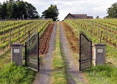 Abandon despair, all ye who enter here -- the gates at Clos Electrique - Cameron winery. Firewood Storage, Pinot Noir, Gates, Abandoned, Oregon, Vineyard, Wine, Outdoor, Left Out
