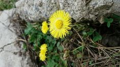 #spring#wonder#nature