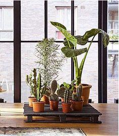 support plantes et jarres en palette bois