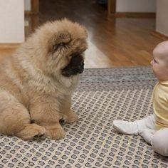 Love that fluffy dog