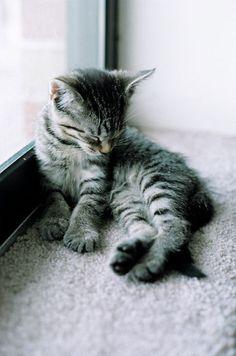 Kittens Galore! Kitten Pictures Gallery: Kittens Galore! Photo Album: Felicity