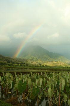 Hanalei Rainbows