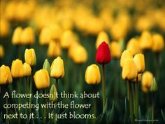 A flower doesn't think about competing with the flower next to it . . . It just blooms.