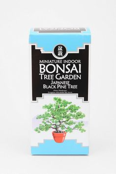 Grow your very own mini Bonsai tree!
