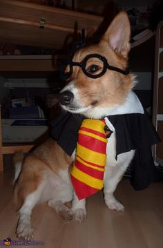 Nicole: Being a Harry Potter fanatic I thought it was fitting to have my 2 year old corgi dress as such. She was a great sport and actually loved it! The...