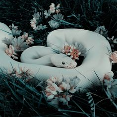 Esbeidy - - You are in the right place about albino animal snake Here we offer you the most Pretty Snakes, Beautiful Snakes, Cute Reptiles, Reptiles And Amphibians, Animals And Pets, Baby Animals, Cute Animals, Beautiful Creatures, Animals Beautiful