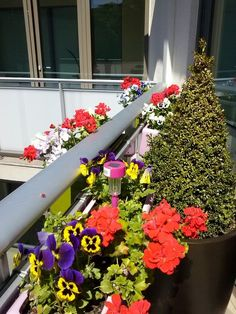 Summer display of flowers on the terraces at the LuxLoft #CorporateRental and #Holiday serviced apartment Liepaja, #Latvia