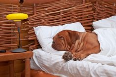 Staycation? It Need Not Be a Bummer for You and Your Dog | Dogster