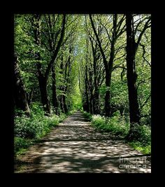 Miller Park Preston Framed Print featuring the photograph The Avenue Of Limes At Mill Park 3 by Joan-Violet Stretch