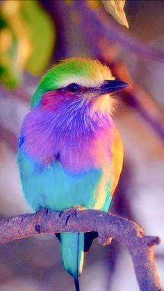 Cute Birds, Pretty Birds, Small Birds, Little Birds, Colorful Animals, Colorful Birds, Most Beautiful Birds, Animals Beautiful, Bird Barn