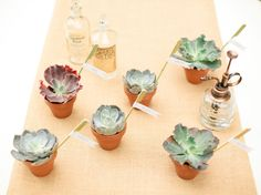 Succulents make great placement cards and favors because you can plant them after! <3