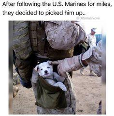 United States Marine befriends  a  stray puppy. 💙