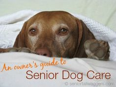 Older dogs have special needs, but senior dog care doesn't have to be challenging.  Find the info. you need in this practical guide to taking care of your golden oldie.