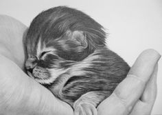 Kitten in graphite by on DeviantArt Animal Drawings, Pencil Drawings, Black Pen Sketches, Pictures To Draw, Drawing Pictures, Graphite Drawings, Cairn Terrier, Realistic Drawings, Disney Pictures