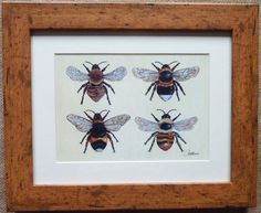 Bumble Bee Print - Bee Print - Bee Picture - Bee Illustrative Wall Art  Four Bees on Canvas - A Favourite among bee fans!  Framed Print  The framed image of  Four Bees on Canvas otherwise none as Canvas LVII is that of a Shrill Carder bee a Garden Bumble bee a White-tailed Bumble bee and a Common Carder bee. This image has been so very popular, it is one of the favourites at Artisan markets!  This framed print will make a fabulous feature addition to your wall, wherever you display this…