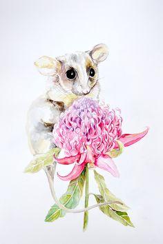 Watercolor Plants, Watercolor Animals, Watercolour Painting, Watercolours, Australian Native Flowers, Australian Animals, Waratah Flower, Hummingbird Art, Watercolor Pictures