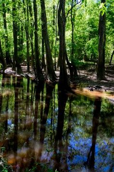 Congaree National Park, SC - Picture of Congaree National Park, Hopkins - Tripadvisor American National Parks, National Parks Usa, Temperate Deciduous Forest, Congaree National Park, Sea To Shining Sea, Growing Tree, South Carolina, Wilderness, Acre
