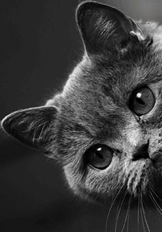 Cats are animals that are more beloved pets to pet lovers because of their spoiled and cutest. Animals And Pets, Baby Animals, Cute Animals, Cute Kittens, Cats And Kittens, Beautiful Cats, Animals Beautiful, Animal Gato, Photo Chat
