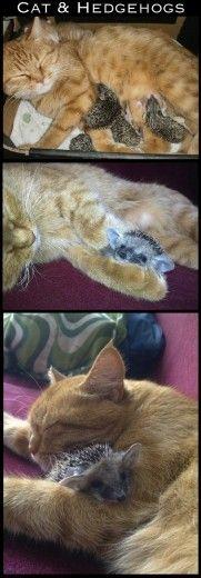 Gatto e riccetti