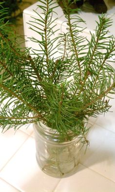 Pine branches from the Christmas tree in mason jars and around the house.