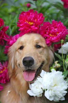 Lolz it's like a doggie headshot #Repin By:Pinterest++ for iPad#